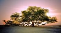 Reality Tree 2