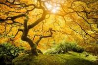 Reality Tree 3